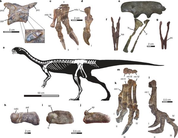 хищные динозавры скелет