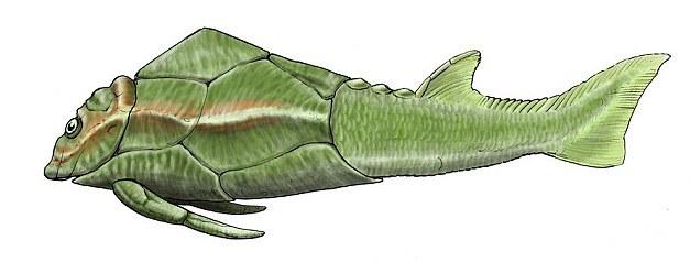 окаменелая древняя рыба