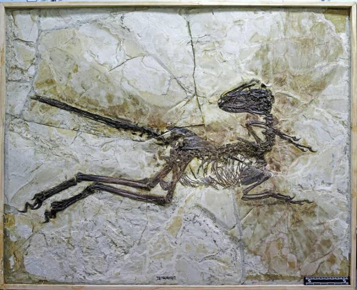 крылатыйдромеозавр