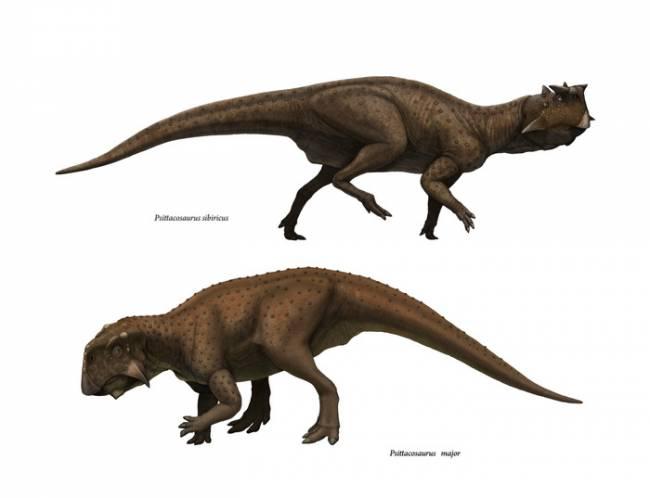 пситтакозавр фото