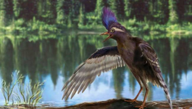 предки современных птиц