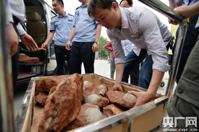 В Китае найдено 43 окаменевших яйца динозавров