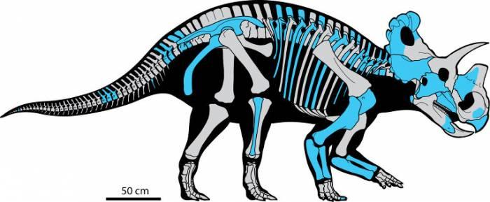 трехрогие динозавры