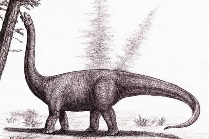аустрозавр