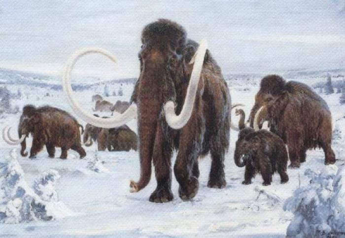 История мамонтихи