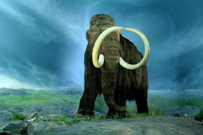 ДНК мамонта