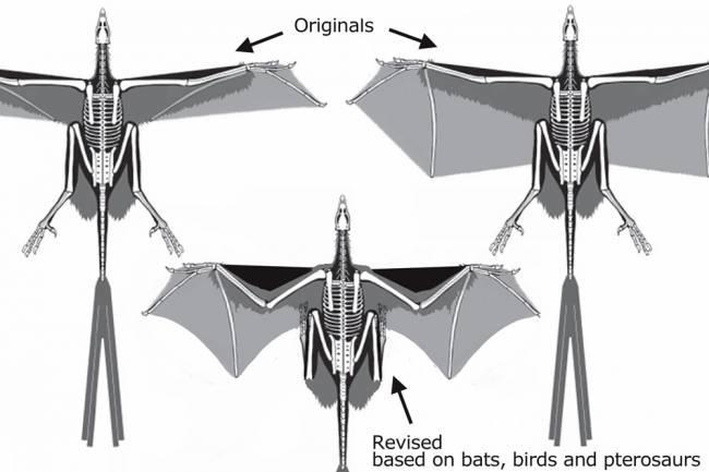 Скансориоптеригиды скелет