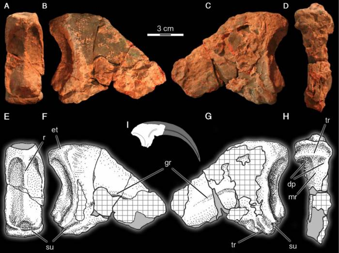 кости динозавра