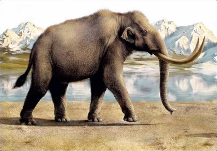 фото степной мамонт