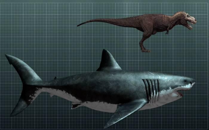 древняя акула мегалодон фото