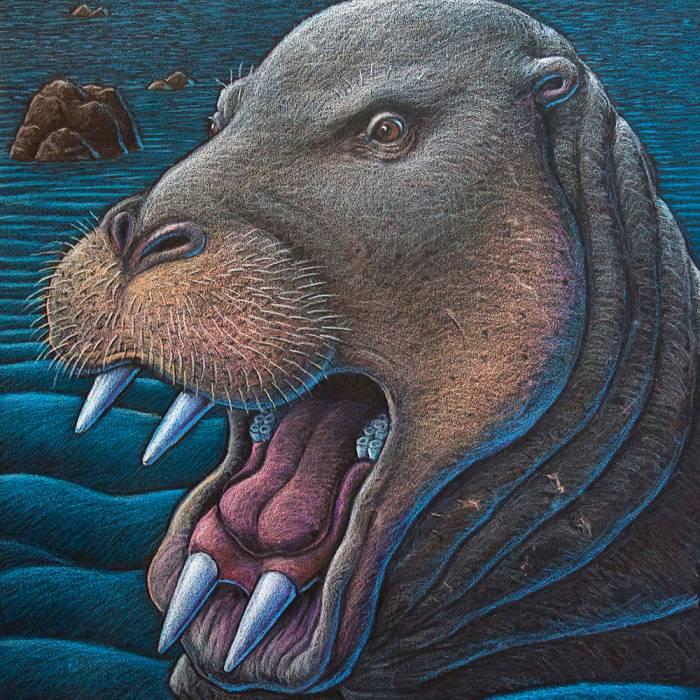 морские бегемоты