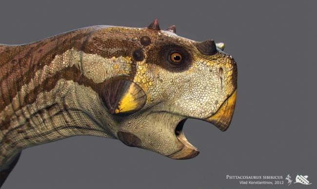 пситтакозавр голова