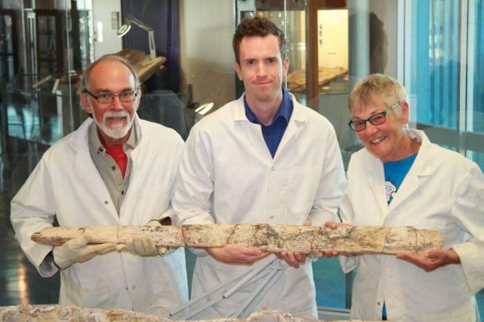 аустрозавр кости