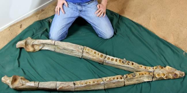 кронозавр кости