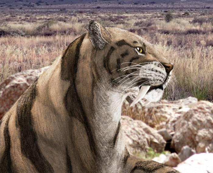 саблезубый тигр