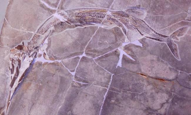 древние хищные рыбы фото