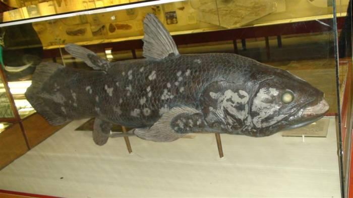 древнейшая рыба целакант
