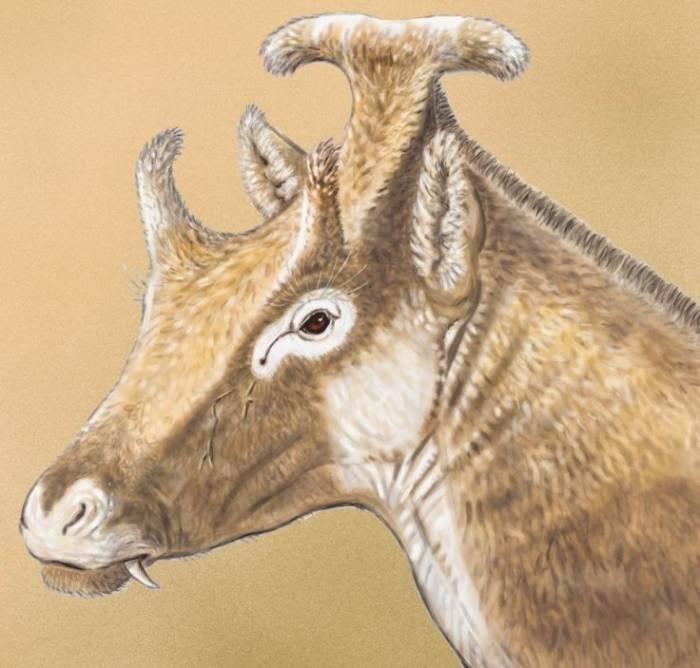 жираф с тремя рогами