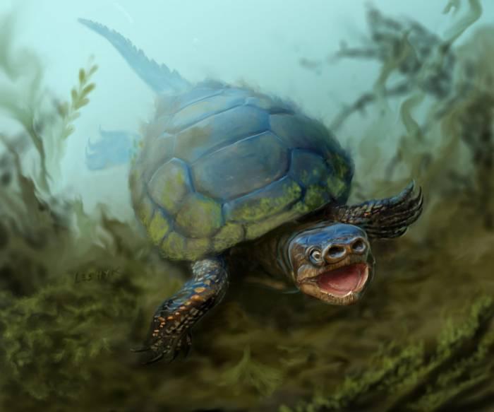 Останки древней черепахи с носом-пятачком нашли в Техасе