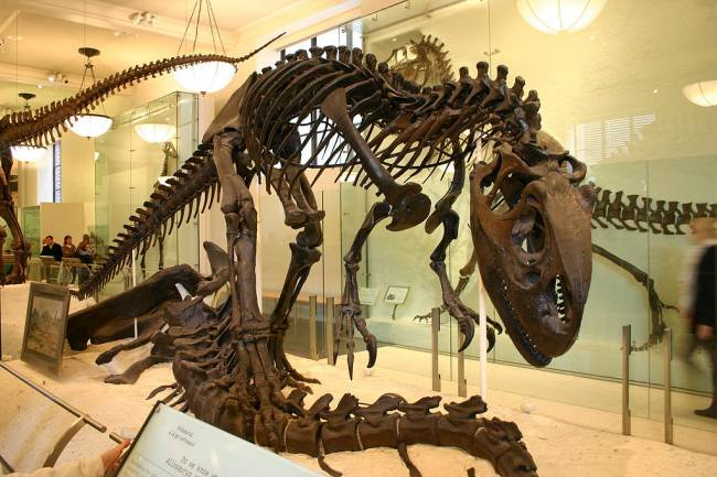Аллозавр музей