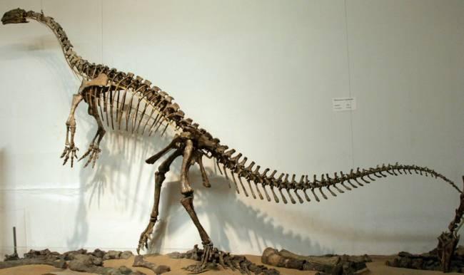 Платеозавр скелет