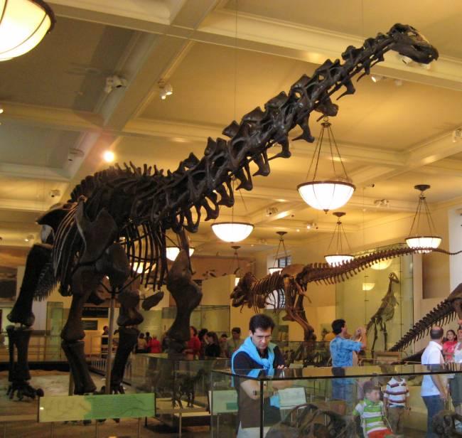Апатозавр скелет