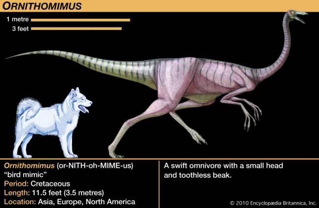 Динозавр орнитомим