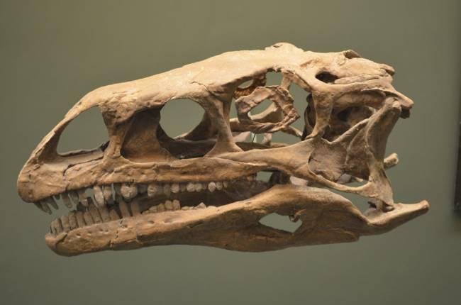 Платеозавр череп