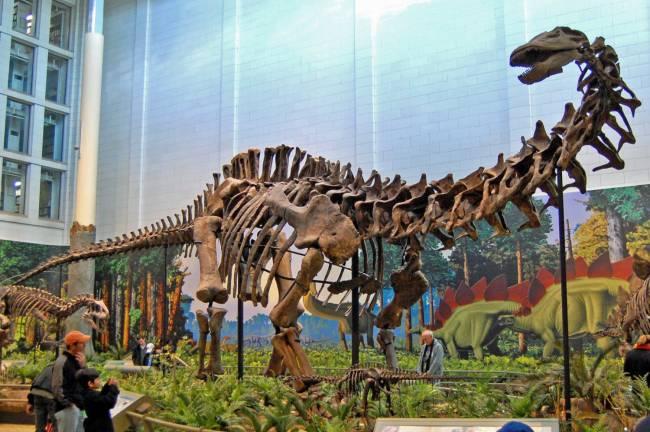 Апатозавр музей