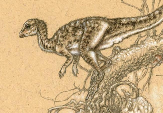 Лиеллиназавра фото