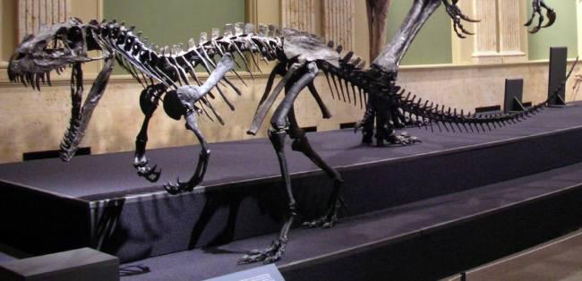 Цератозавр скелет