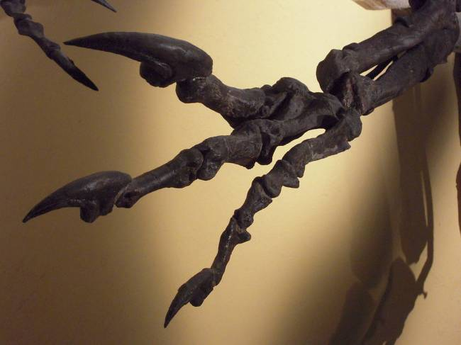Аллозавр когти