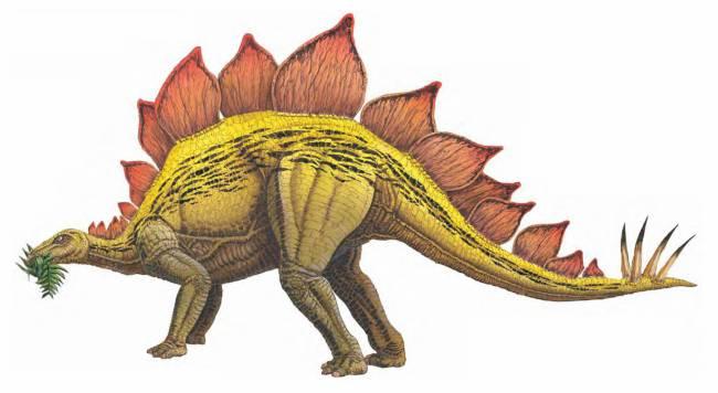 Стегозавр фото