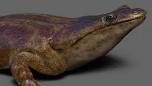 древние саламандры