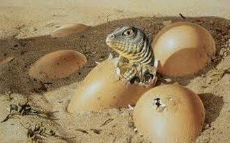 про яйца динозавра