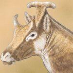 трехрогие саблезубые жирафы