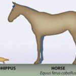 древний предок лошади