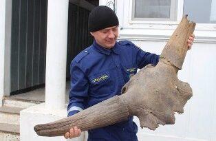 доисторический буйвол