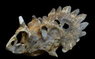 рогатый динозавр
