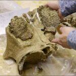 Причины исчезновения гигантских млекопитающих