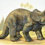 Трицератопс (Triceratops)