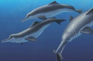 речных дельфинов