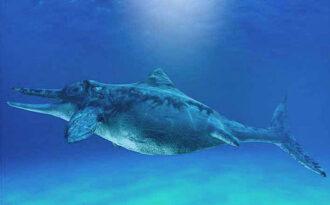 морской ящер из родаихтиозавров