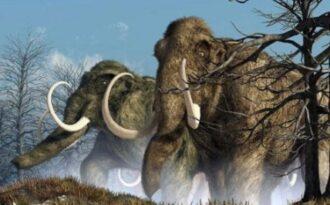 где могли жить мамонты