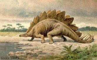 Стегозавр (Stegosaurus)