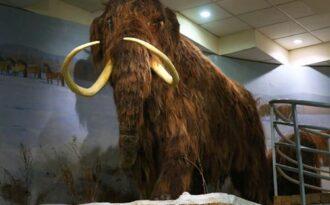 музей мамонтов