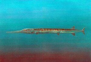древние хищные рыбы