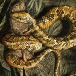 змея с четырьмя ногами