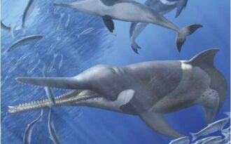 доисторический кит