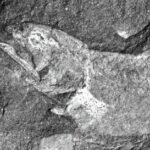 древнейшая рыба-целакант